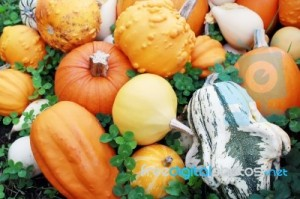 various-pumpkins-10026569